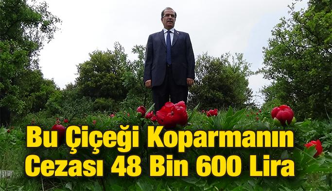 Bu Çiçeği Koparmanın Cezası 48 Bin 600 Lira