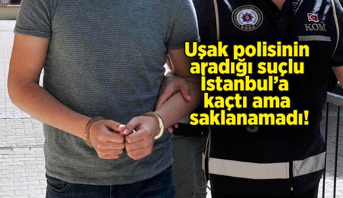 Uşak polisinin aradığı suçlu İstanbul'a kaçtı ama saklanamadı