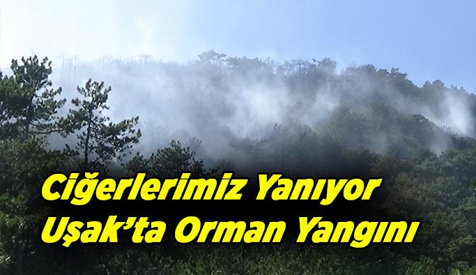 Uşak'ta orman yangını söndürülmeye çalışılıyor
