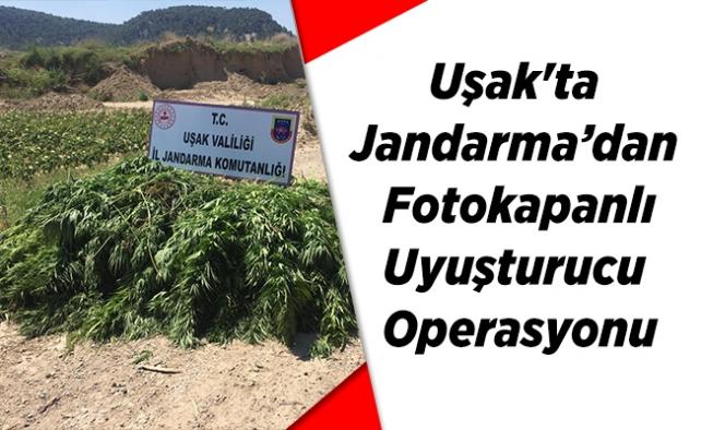 Uşak'ta Jandarma'dan  Fotokapanlı Uyuşturucu Operasyonu