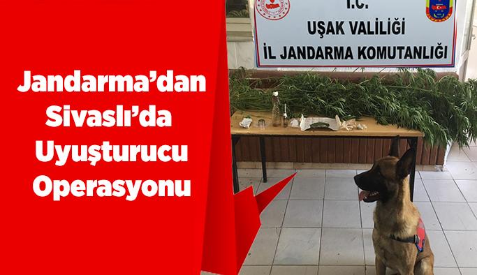 Jandarma'dan  Sivaslı'da Uyuşturucu Operasyonu