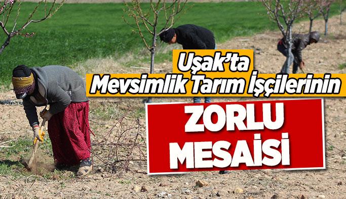 Uşak'ta  Mevsimlik Tarım İşçilerinin Zorlu Mesaisi
