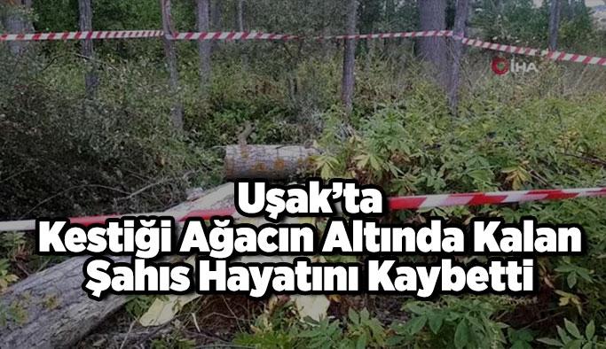 Uşak'ta Kestiği Ağacın Altında Kalan Şahıs Hayatını Kaybetti