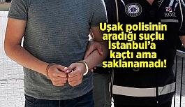 Uşak polisinin aradığı suçlu İstanbul'a...
