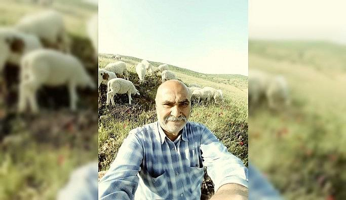 Uşak'ta koyun otlatmaya giden adam...