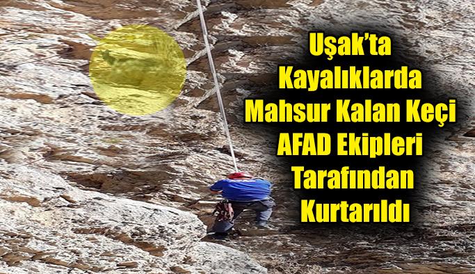 Uşak'ta Kayalıklarda Mahsur Kalan Keçi AFAD Ekipleri Tarafından Kurtarıldı