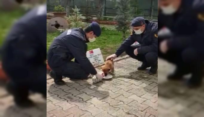 Yavru köpek jandarma bakımında