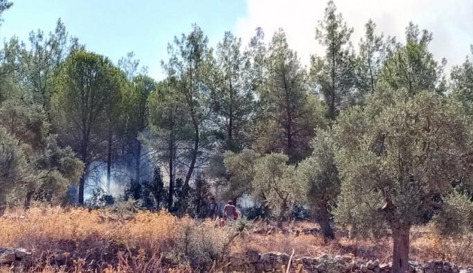 Milas'ta orman yangını kısa sürede söndürüldü