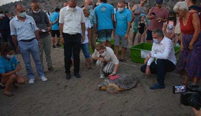 Tedavileri tamamlanan ve takip cihazı takılan caretta carettalar denize bırakıldı