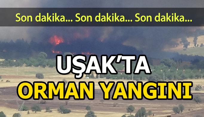 Uşak'ta Ki Orman Yangınlarını Söndürme Çalışmaları Devam Ediyor
