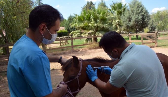 Yaralı at koruma altına alındı