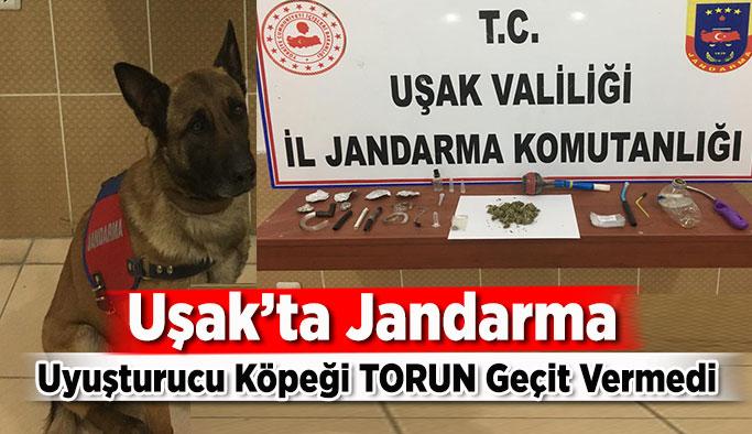 Uşak'ta Jandarma Uyuşturucu Köpeği TORUN Geçit Vermedi