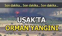 Uşak'ta Ki Orman Yangınlarını Söndürme...